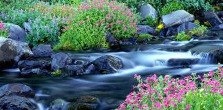 La bondad solo florece en la libertad