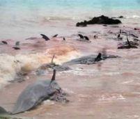 Marea Britanie. 20 de delfini au murit şi alţi 80 sunt în pericol