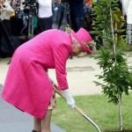 ¡Sáquense! Isabel II rechaza ayuda y planta sola un árbol