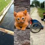 Deportista paralímpico se baja de su silla para salvar a gatito