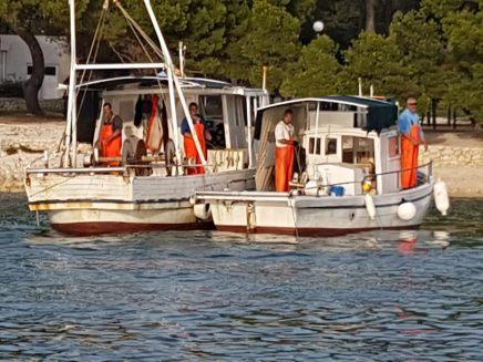 Ribari petrcane (1)