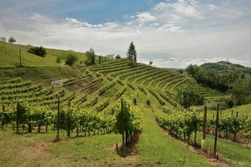 Mostra del Vino Superiore dei Colli a Corbanese