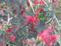 The botanical gardens in Tucson