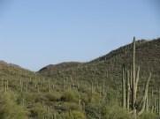 Landscape around Tucson