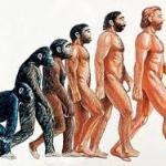 Teoría del simio acuático