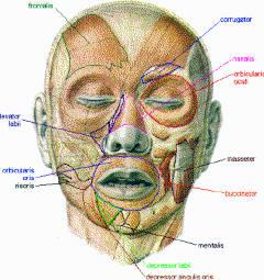 Gymnastique des muscles du visage pour en rajeunir les traits