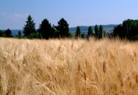 az_agricola_3