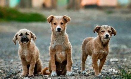 En la Pintada se preocupan por el bienestar de los animales en situación de calle