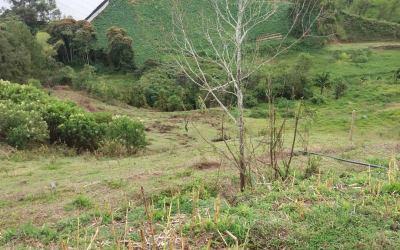 Recuperación de zonas verdes en Dabeiba