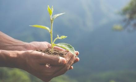 Colectivo jóvenes conectados con el ambiente en La Ceja, representan una alternativa pedagógica y comunitaria.