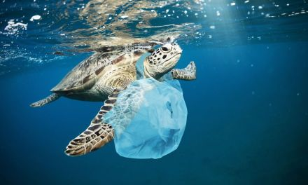La afectación de las bolsas plásticas al planeta