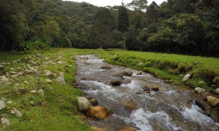 Dabeiba protege su entorno ambiental