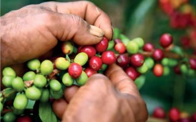 San Andrés de Cuerquia implementa protocolos de bioseguridad en los cafeteros