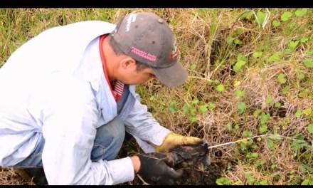 Reforestaciones en veredas de Santa Fe de Antioquia