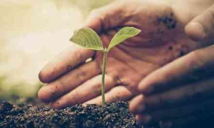 En Antioquia se sembraron más de 4 millones de árboles