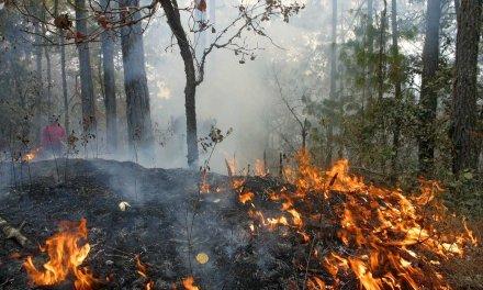 Evitemos incendios de cobertura vegetal