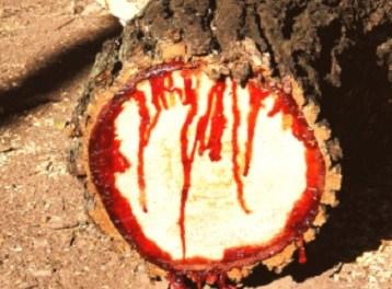 Mató a su marido con un tronco de madera