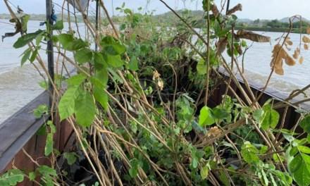 Medio ambiente y vivienda en Nechí