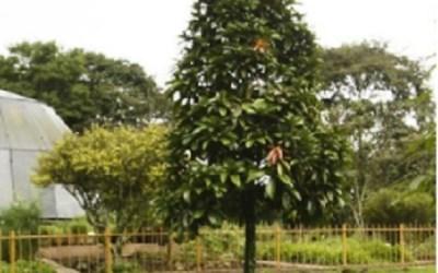 Poema: Susurro de un árbol antioqueño