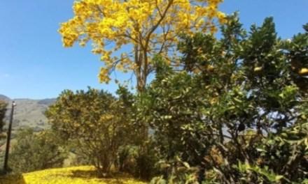 Reforestando Titiribí Antioquia