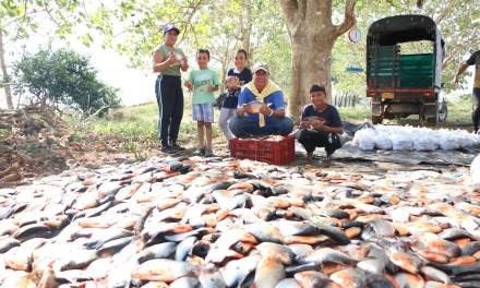 Cuarta entrega de alimentos en Cáceres