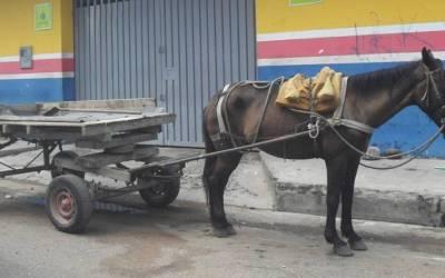 Reemplazo de vehículos de tracción animal es realidad en Turbo
