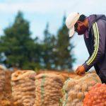 Prosigue el abastecimiento agroalimentario en el Norte, Suroeste y Bajo Cauca