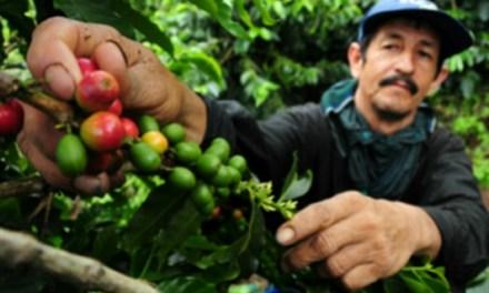 Productores cafeteros reciben kits de fertilizantes y cal agrícola en Vegachí