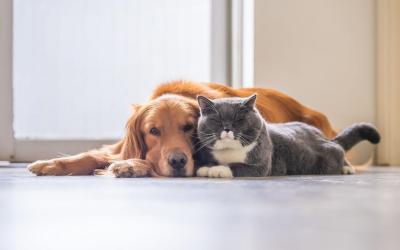 Los perros y gatos son parte activa de Apartadó