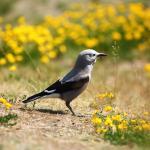Observatorio y registro de aves en Santa Fe de Antioquia