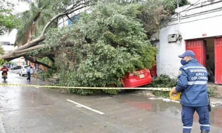 Dagrd y Bomberos Medellín han atendido 394 desplomes de árboles