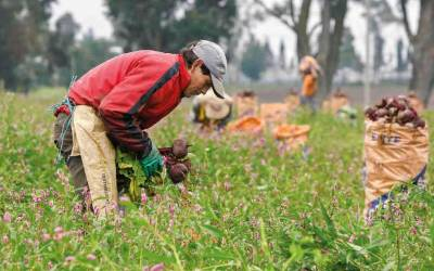 Abastecimiento de alimentos agrícolas funciona con normalidad en Antioquia