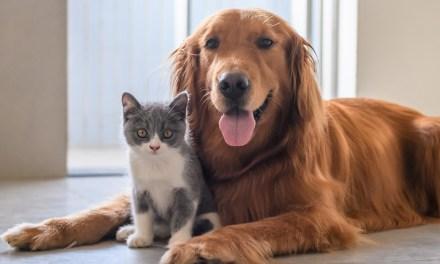La vida digna de las mascotas es prioridad en Abriaquí