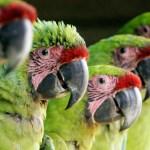 Se fortalece la protección y conservación de la fauna silvestre