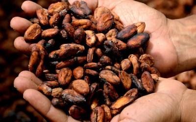 """""""La Ruta del Cacao"""" el turismo sostenible que se podrá recorrer en el Oriente"""