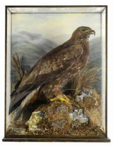 Rare taxidermy collection set for sale