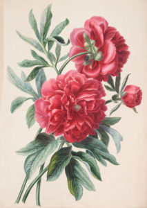 A botanical watercolour