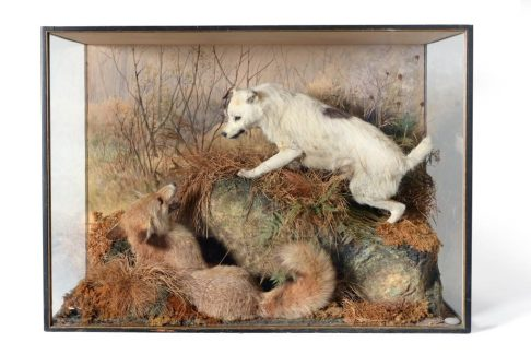 A Peter Spicer taxidermy