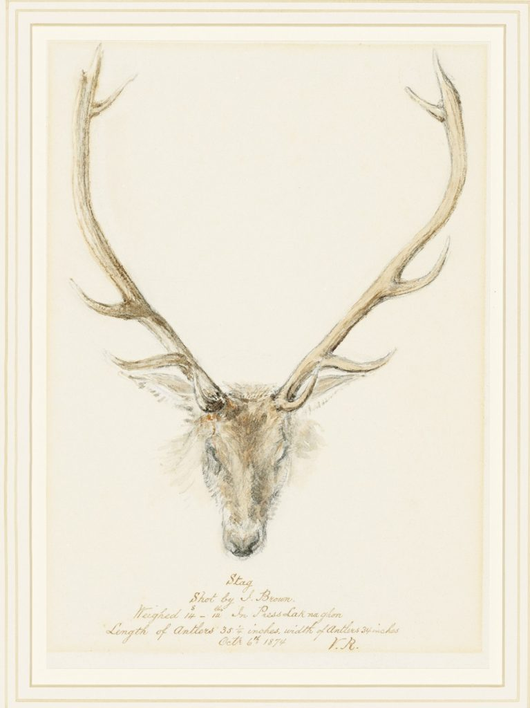 Queen Victoria watercolour of a stag shot by John Brown