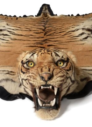 Antique taxidermy tiger skin