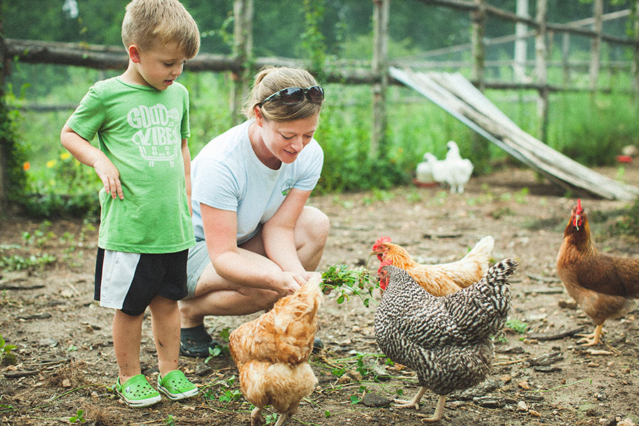 Ethan and Mandy feed the chickens clover in the coop