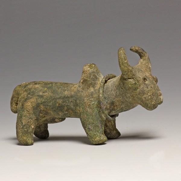 Western Asiatic Bronze Zebu
