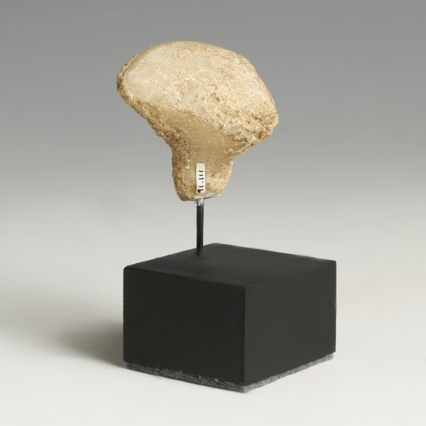 Small Marble Stargazer Head