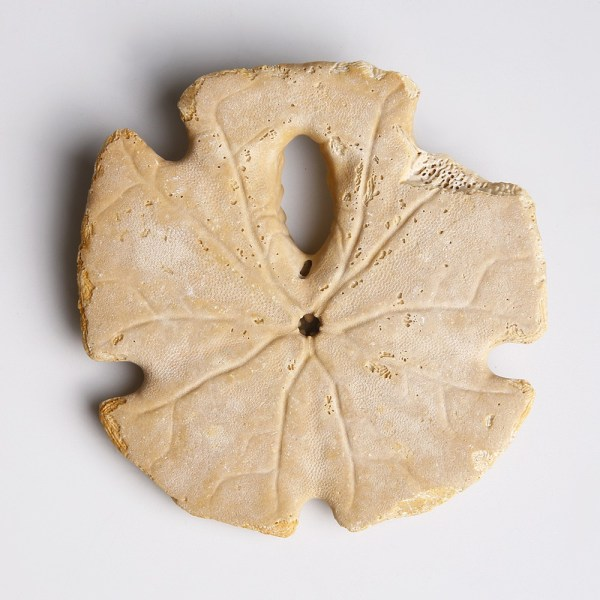 Sand Dollar from the Miocene Period