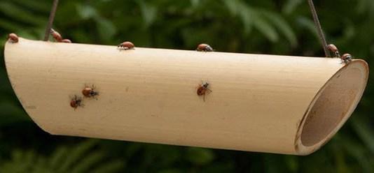 kutu bambu