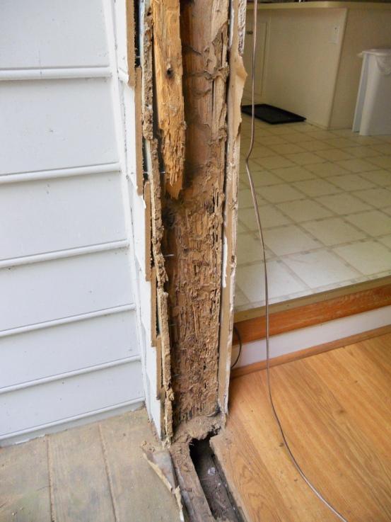 kerusakan kayu