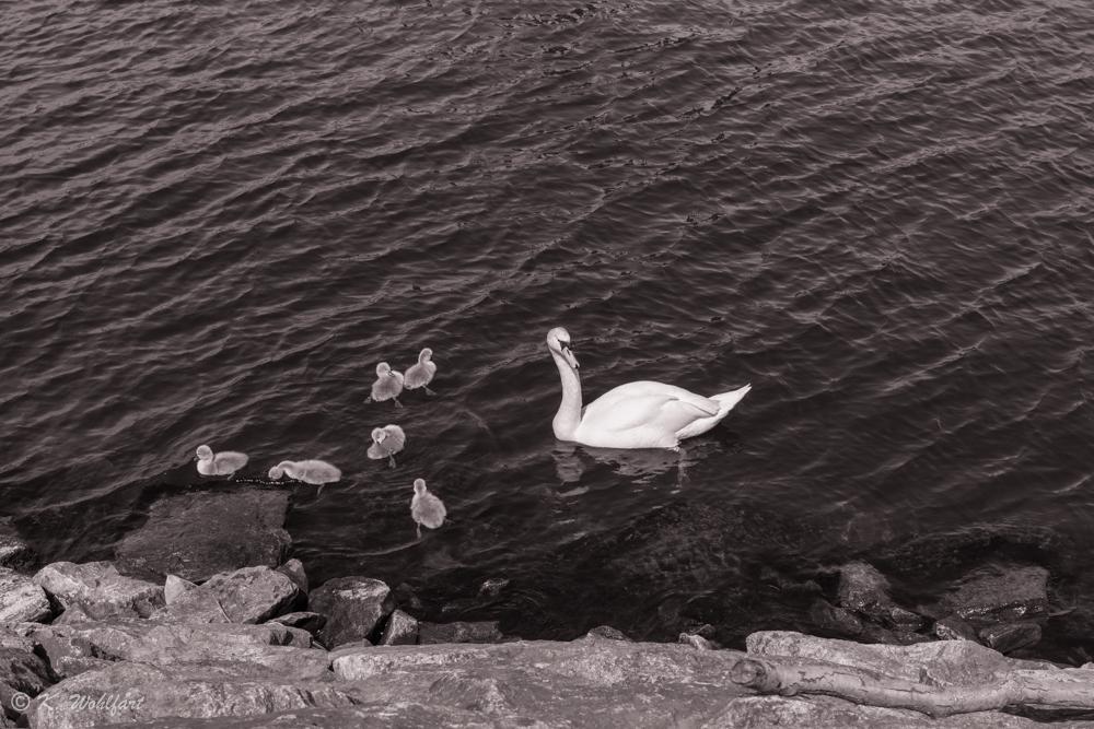 stcokholm söder hammarby sjöstad-23