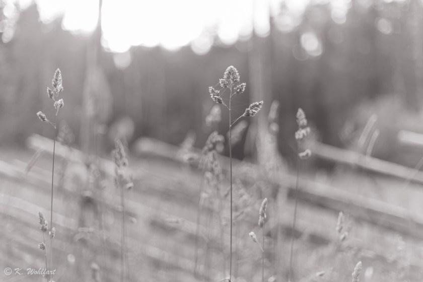 nature_grythyttan-11