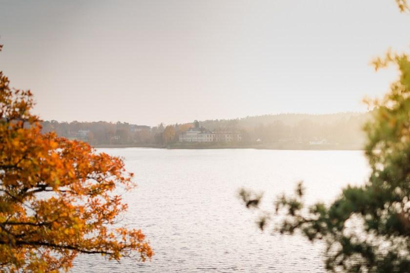 stockholm_rosehip_autumn-41