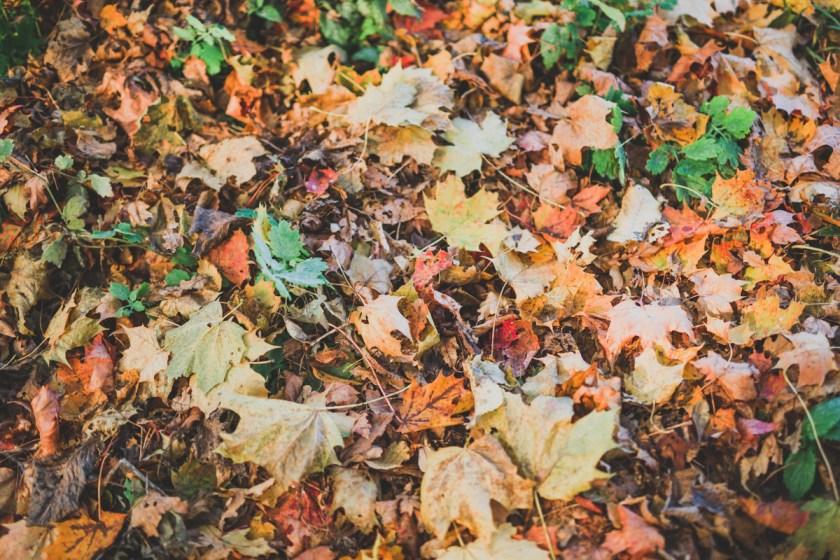 stockholm_rosehip_autumn-62